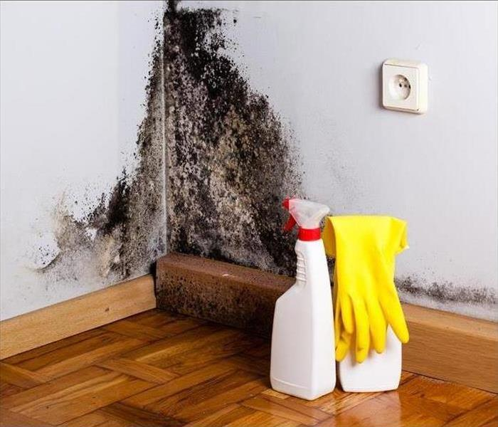 Mold Remediation Clear Lake Home Health: How to Kill Mold