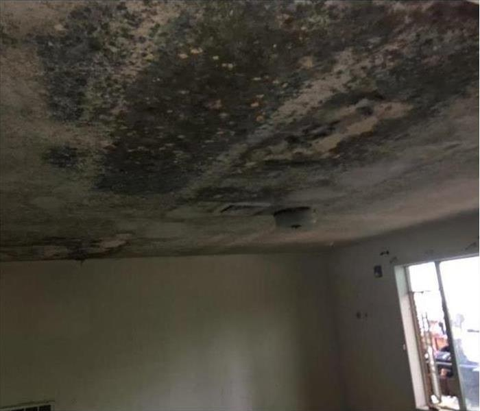 Ceiling covered with black mold due to humidity