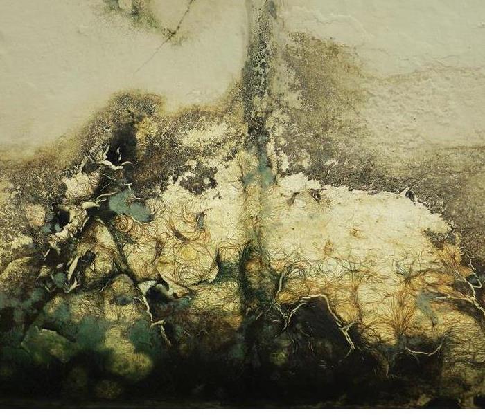 Established Standards for Mold Remediation | SERVPRO of