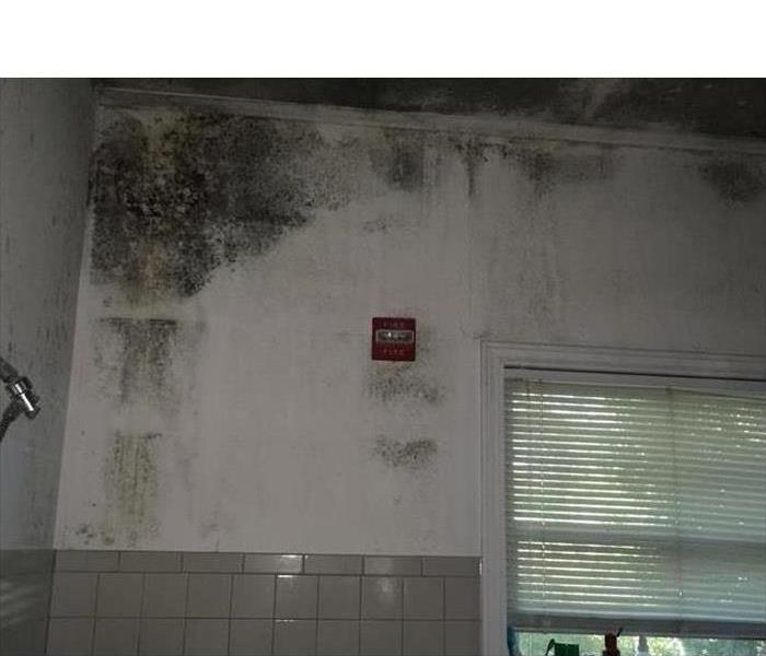 Why SERVPRO Should You Schedule a Mold Inspection Before Buying a Building?