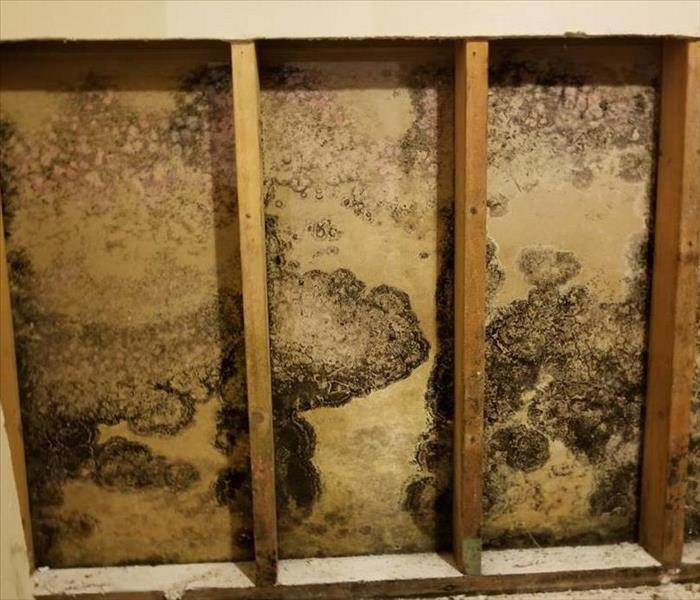 Mold Remediation The Return of the Mold: Conditions That Lead to Recurring Fungal Issues